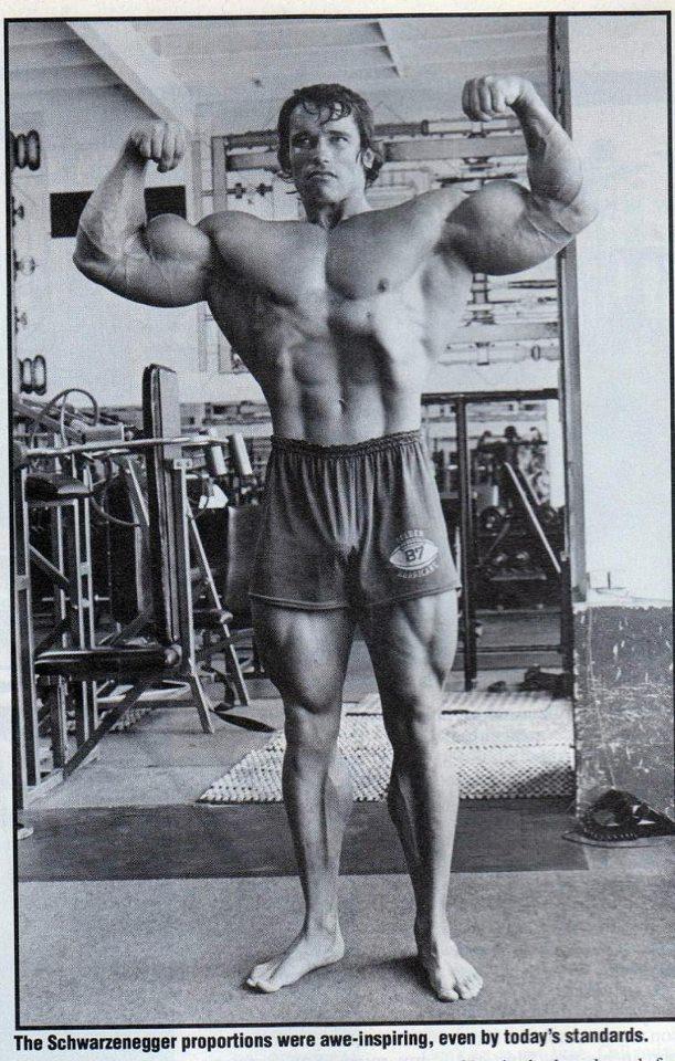 MUSCLE GALLERY 16 :: SCHWARZENEGGER.IT :: Arnold ...